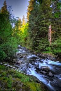 Sweet Creek, Oregon, May, 2012