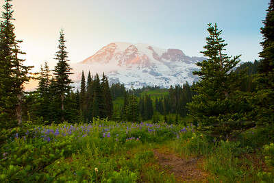 Mount Rainier and August wildflowers. WA