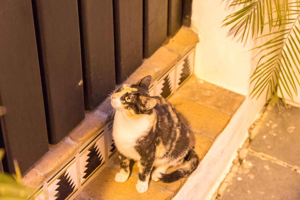 Cats in Old San Juan