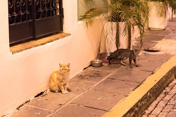 Cats in Old San Juan