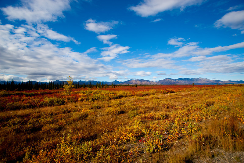 Fall colors on the tundra