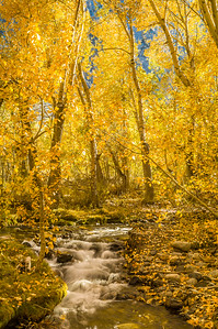 McGee Creek and Aspens