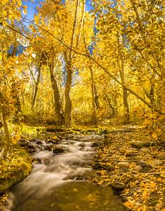 Turning Aspens - McGee Creek Canyon