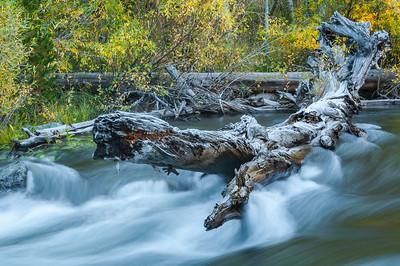 Fallen Tree in Sierra Stream