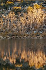 Willows on June Lake