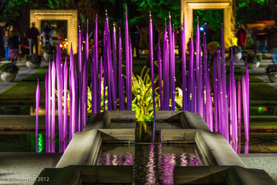 Reeds Chihuly at Night, Dallas Arboretum, TX, 2012