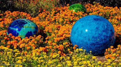 Nijima Floats Chihuly Exhibit, Dallas Arboretum, TX, 2012