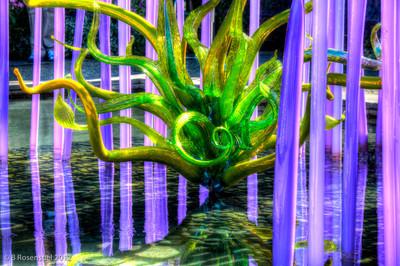 Chihuly Exhibit, Dallas Arboretum, TX, 2012