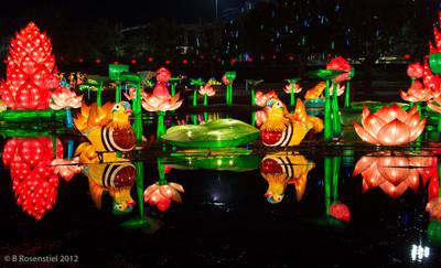 Chinese Lanterns, Dallas, Texas, 2012