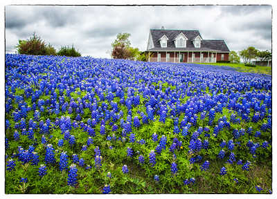 Bluebonnet Trail, Ennis, Texas, March, 2012