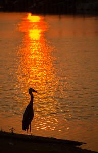 Grapevine Marina Sunrise, TX, June, 2012