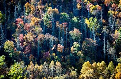 Sunlit Mountainside- NC