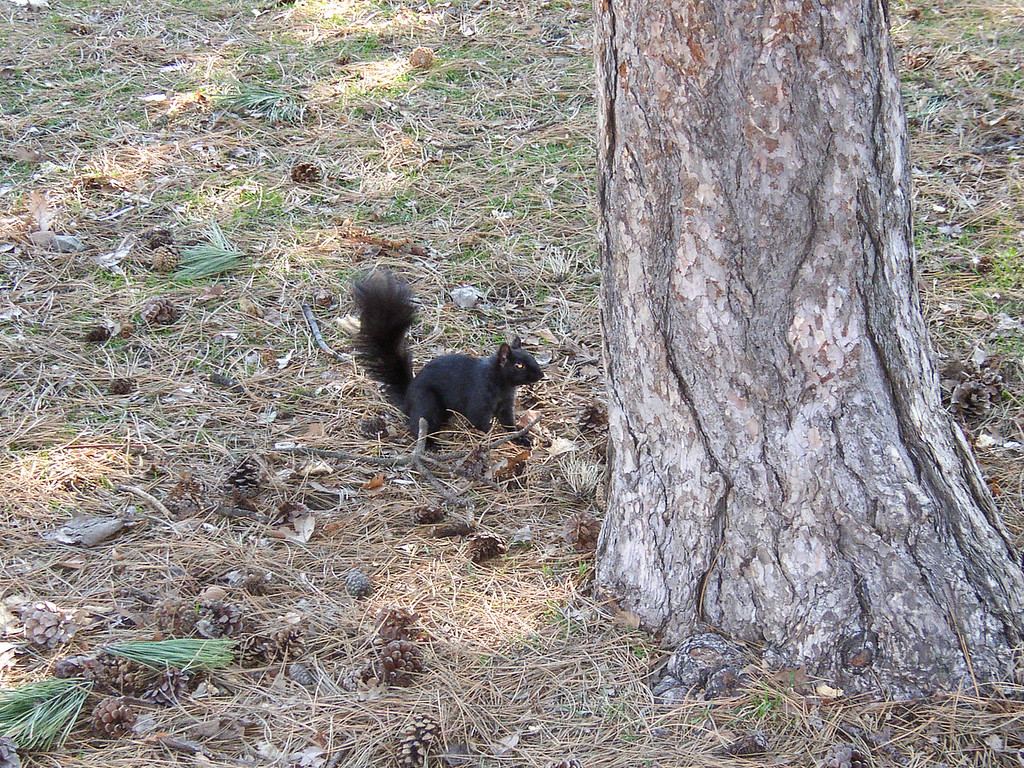 Black squirrel in Queen's Park.