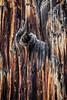 Burned tree trunk
