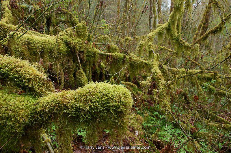 Beazell Memorial Forest