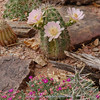 Cactus spec ?