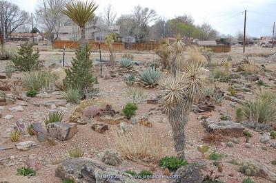 garden with succulents