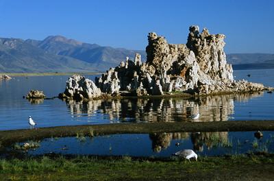 Morning at Mono Lake