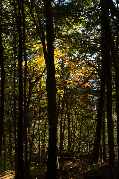 A Canopy of Fall Colors