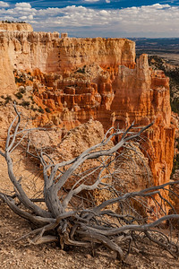 Bryce Canyon Edge