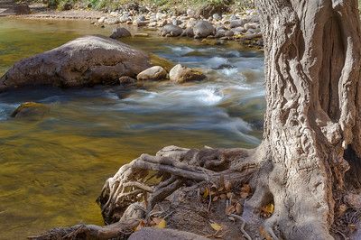 Roots of the Virgin River