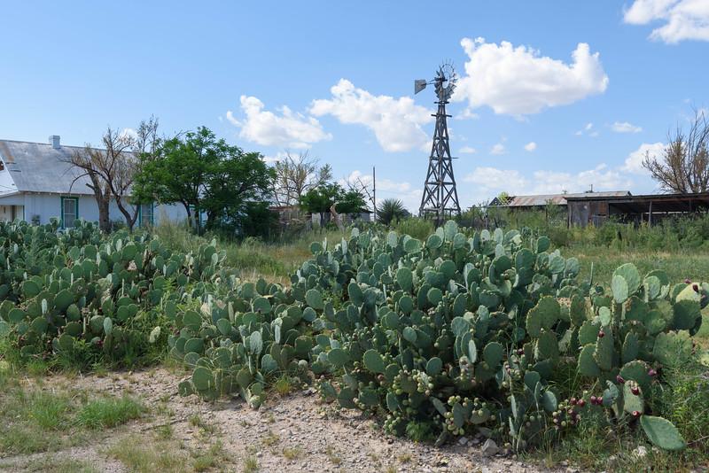 Windmill and Cactus, Marathon