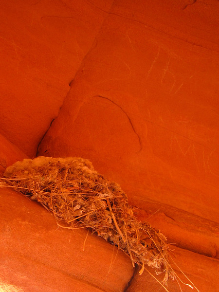 Bird nest inside a beehive formation at Valley of Fire State Park.