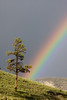 Rainbow over Mammoth Hot Spring Cabins