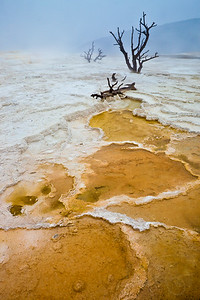 Canary Springs. Mammoth Hot Springs, Yellowstone National Park, Wy.