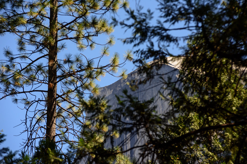 Half Dome as seen from our campsite.