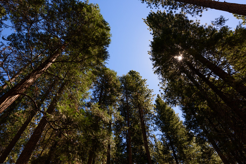 Lower Pines