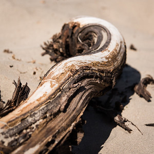 Desert Drift Wood, Death Valley Mesquite Flat Sand Dunes, California, USA