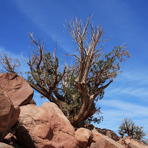 Desert Shrub, Grand Canyon National Park, Arizona, USA