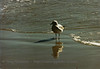 """Peep""<br /> Duck, NC"