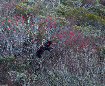North Carolina Joyce Kilmer Wilderness