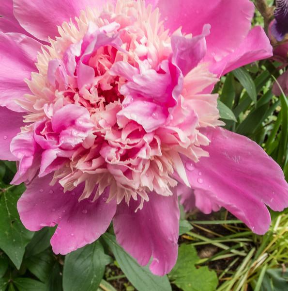 • Flowers I saw in the Newland, NC neighborhood
