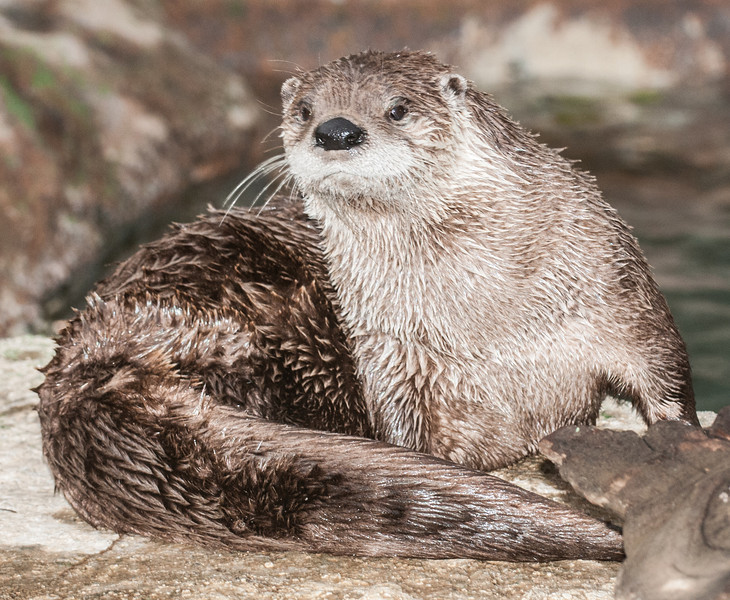 • Grandfather Mountain Animal Habitats which is located in Linville, North Carolina.<br /> • Otter