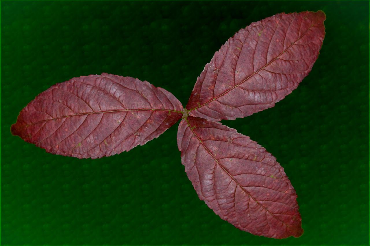 Creative set of leafs