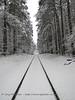 """Tracks""<br /> Chapel Hill, NC"