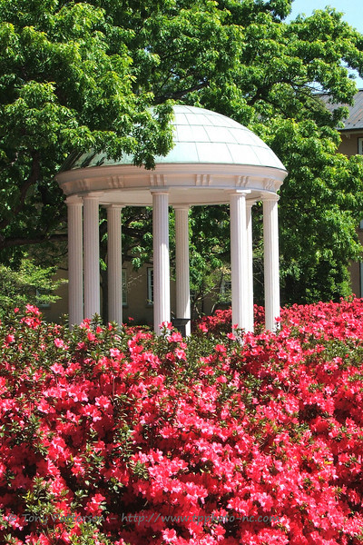 """Old Well (Spring)""<br /> Chapel Hill, NC"