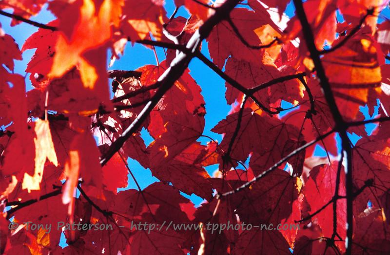 """""""Fall Flames""""<br /> Winston-Salem, NC"""