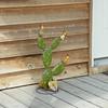 A tin cactus.....