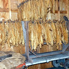 A small example of tobacco leaves hanging up to dry. These kind of frames were hoisted up into tall sheds which had heated pipes at the bottom to dry out the leaves.