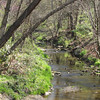 Stream From Other Side of Bridge - The Botanical Gardens at Asheville, NC  4-9-09