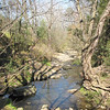 Stream From Bridge - Notice the Tree Hanging Onto the Bank On the Right - The Botanical Gardens at Asheville, NC  4-9-09