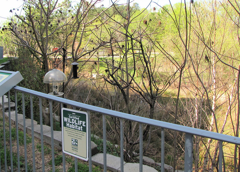 The Certified Wildlife Habitat Area - Centennial Campus Center for Wildlife Education - Raleigh, NC  3-24-11