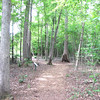 The Woodland Area of Meadowood Walk - Daniel Stowe Botanical Garden - Belmont, NC  5-12-12<br /> Notice the hollowed out tree trunk straight ahead.