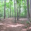 Woodland Path Winds Down to a Lake View - Daniel Stowe Botanical Garden - Belmont, NC  5-12-12