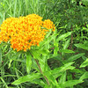 Gorgeous Almost Succulent Flowers - Daniel Stowe Botanical Garden - Belmont, NC  5-12-12