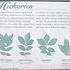 Signage on Hickory Trees - Daniel Stowe Botanical Garden - Belmont, NC  5-12-12